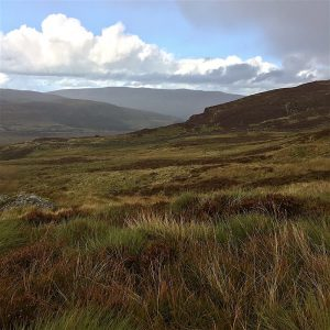 Off trail in the heather and marshland