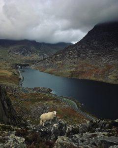 Sheep on Tryfan in Autumn
