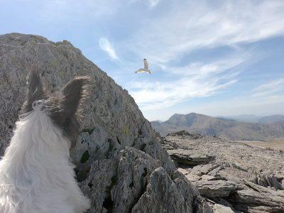 Chasing seagulls...