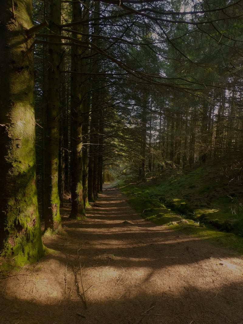 The 4C Snowdonia Loop - Forests