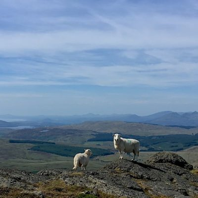 Two locals enjoying the views