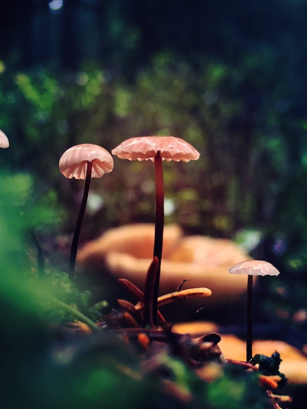Clocaenog Forest Photo Gallery 02