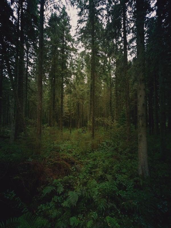 Clocaenog Forest Photo Gallery 07