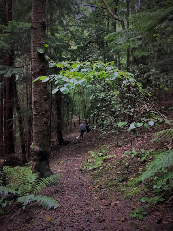 Clocaenog Forest Photo Gallery 08