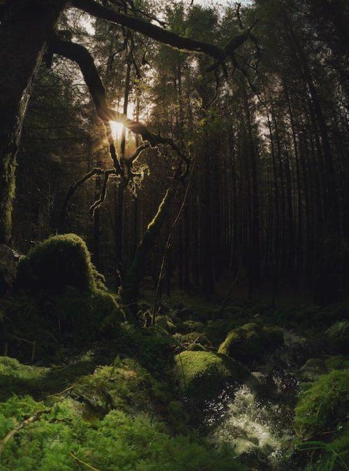 Forest Sunlight Canvas Print