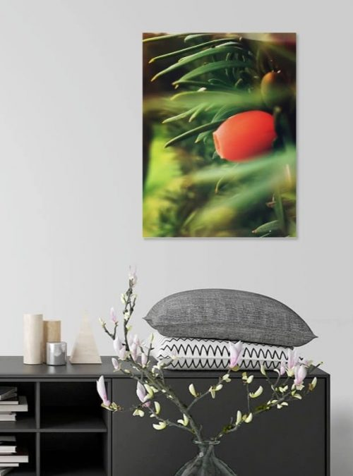 Yew Tree Berry Canvas Print Interior Setting