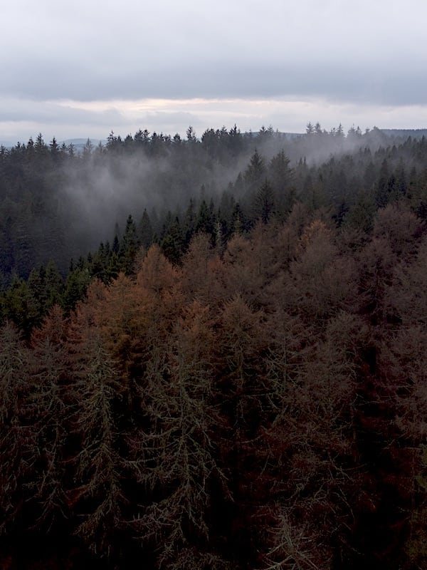 Clocaenog Forest Mist