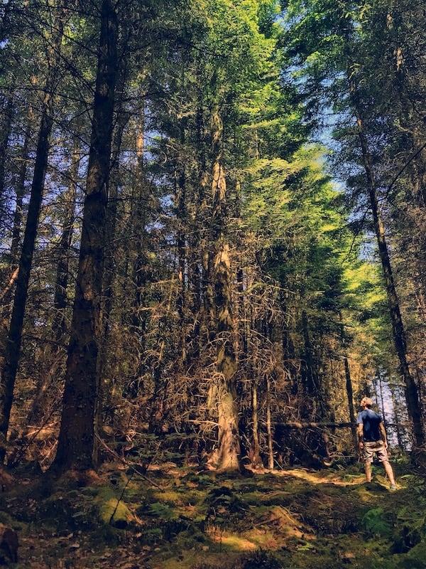 Clocaenog Forest Sunlight