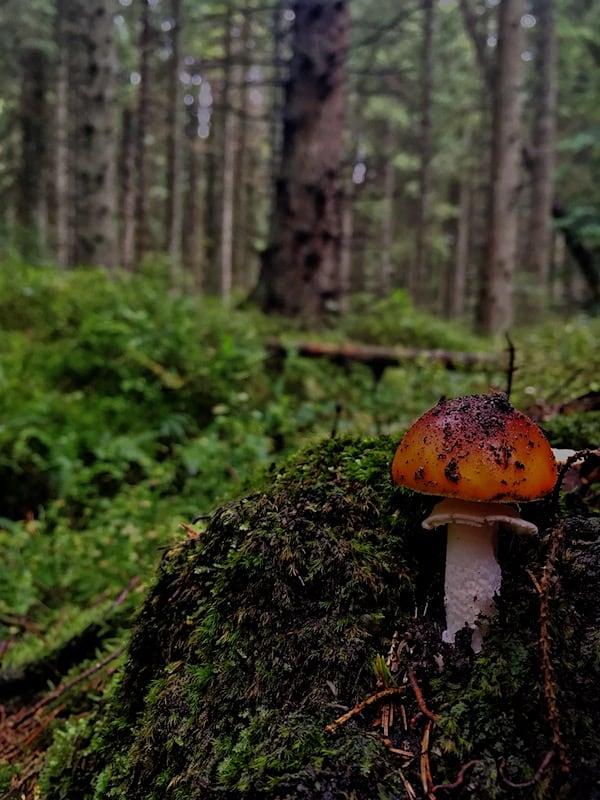 Clocaenog Mushroom