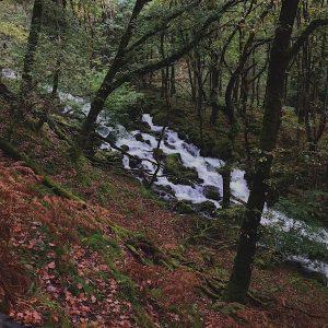 Miniffordd forest