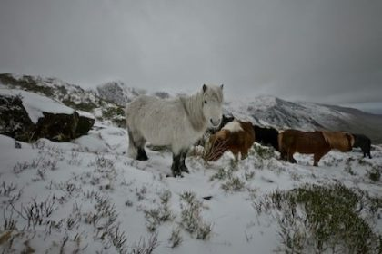 Carneddau Ponies - Exploring Snowdonia National Park, North Wales